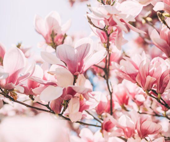 WISHLIST: Spring Cravings | #yourockmylife